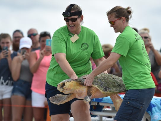 Staff from the Sea Turtle Healing Center at the Brevard County Zoo in Florida release a loggerhead sea turtle in 2016 that was taken to the center to recover from eating pieces of plastic bags.