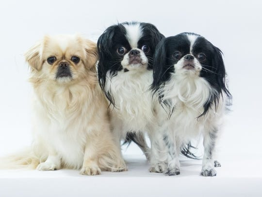 Donna Kahora's current dogs: Lilly, Tommy and Noah