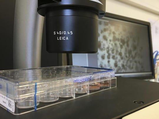 Genetic Frontiers Growing Mini Organs
