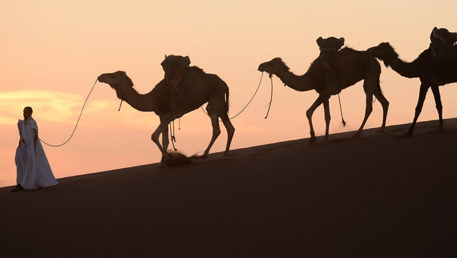 A man walks on a sand dune with his camels in Mhamid el-Ghizlane in the Moroccan southern Sahara desert, on March 16, 2014.