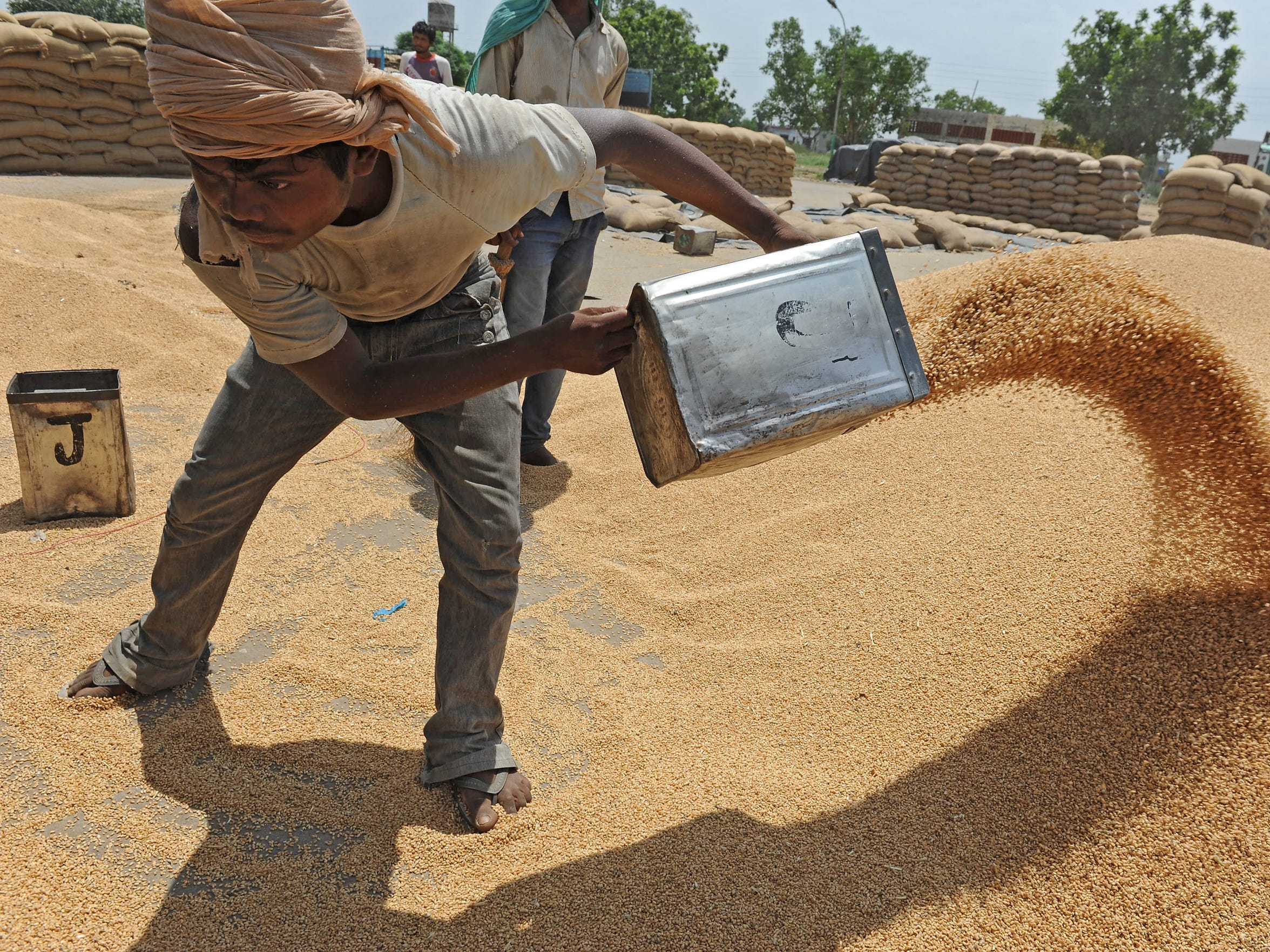 "Chottelal Sural tosses wheat into a pile as workers clean and bag the grain for sale in the village of Swaddi Kalan, in the northern Indian state of Punjab. Many farmers in Punjab alternate between wheat and rice, both of which fetch a government-set, fixed ""minimum support price."" Farmers in Punjab use large quantities of groundwater, and water levels have been dropping."