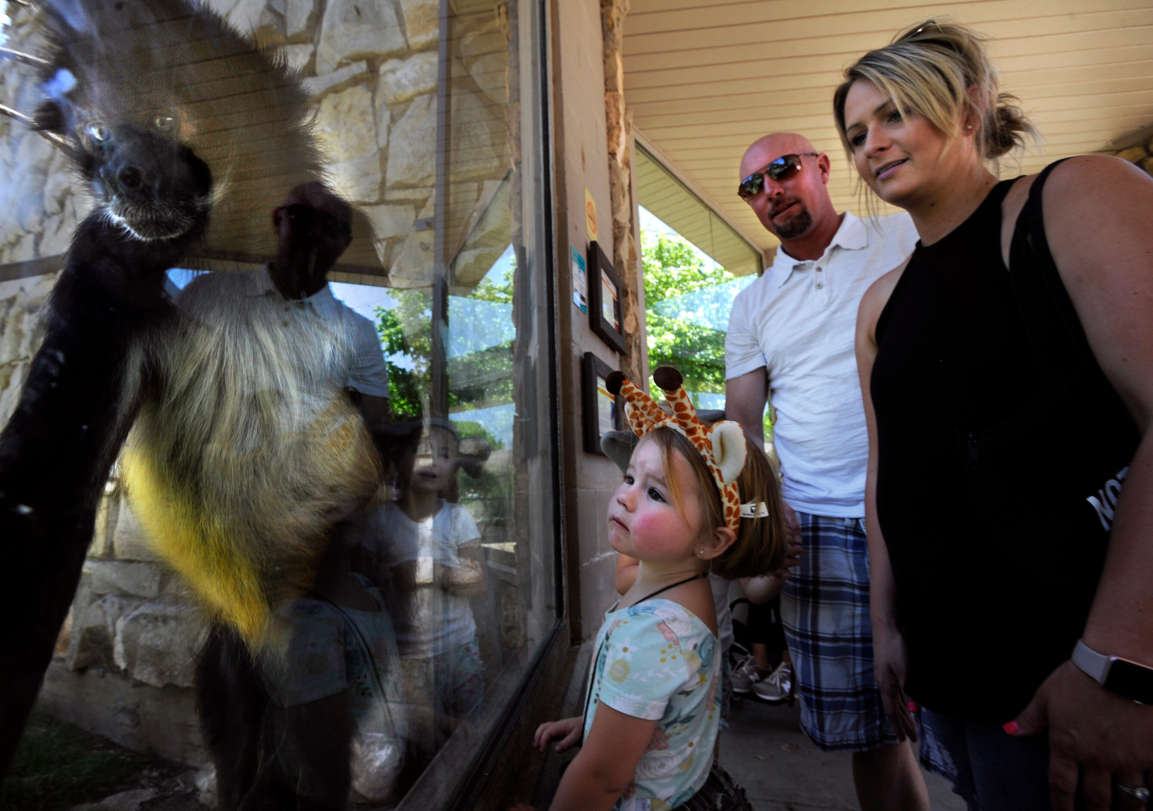 Brylee Smith, 3, Watches One Of The Spider Monkeys