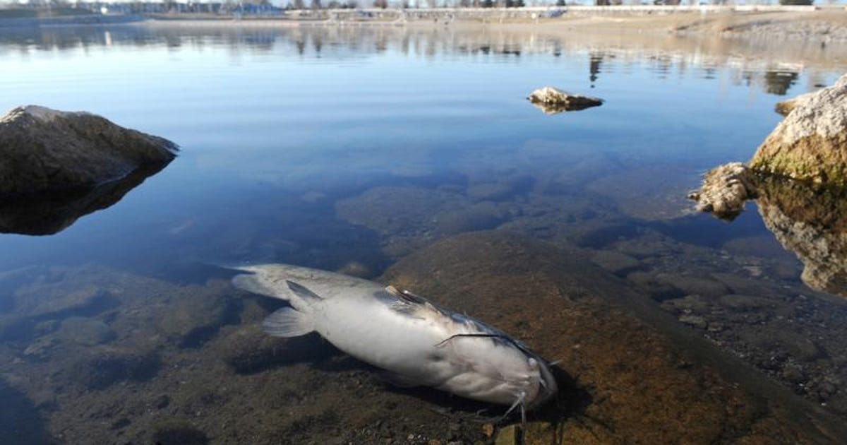 Sparks marina update 100 000 estimated dead fish may be low for Sparks marina fishing