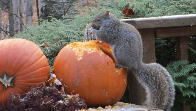 This pumpkin eater was on a bench at the home of Dick and Beckie Hawker, Baileys Harbor.
