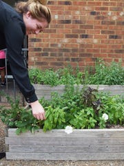 General manager Lauren Hall picks fresh basil for the