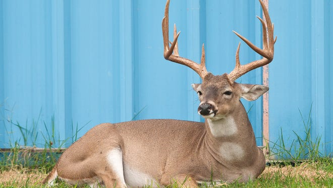 For some, deer camp is a home away from home for hunters and their families alike.