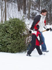 Father and son dragging Christmas tree