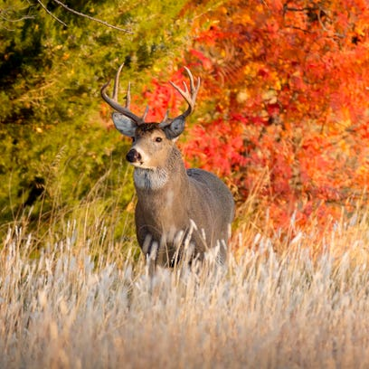 Deer baiting banned in Lincoln, Langlade counties after CWD reported