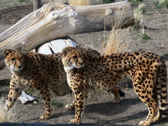 REN Animal Ark 11