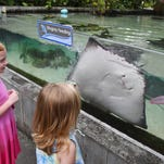 Photos: Stingrays and cute critters at Brevard Zoo