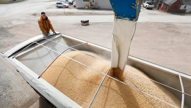 Terry Morrison of Earlham, Iowa, watches as soybeans are loaded into his trailer at the Heartland Co-op,, in Redfield, Iowa.