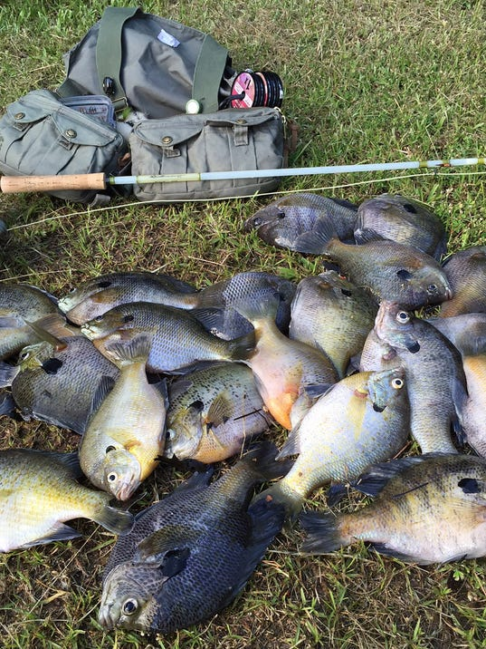 Breamfest 2016 big bucks for bluegill for Fly fishing for bluegill