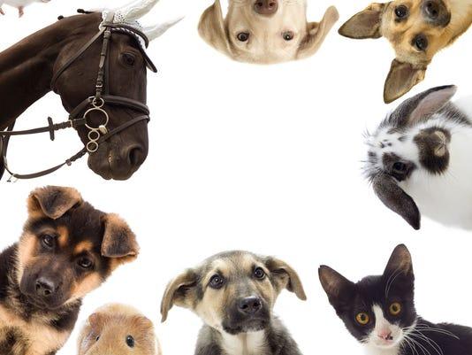 635893279483311856-Animals.jpg