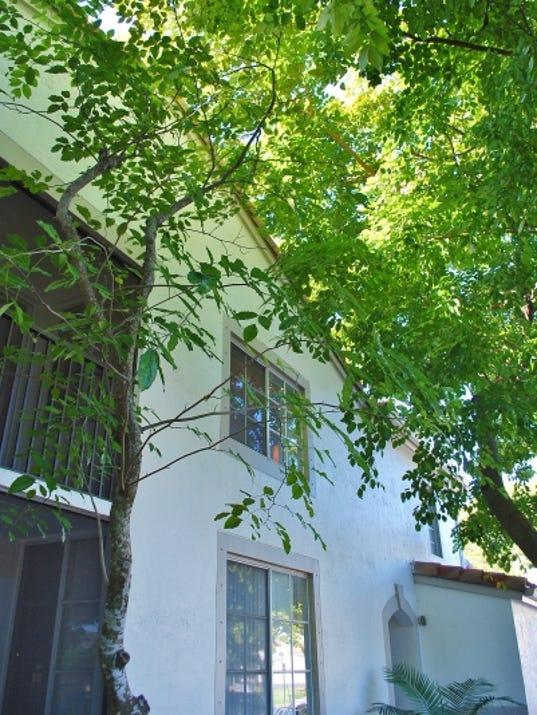 636396114094302227-Tree-Building-Sept-10--yard-doc.JPG