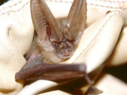 Bat-tastic Night Out: Bat Detecting Basics: 7:30-10:30