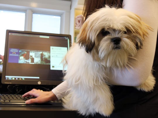 Betsy Palazzo-Dudick of Monmouth Beach, co-owner of Purr 'N Pooch in Tinton Falls, scrolls through the business' website with Molly, a 6-month-old Shih Tzu owned by Pamela Bernardino of Red Bank.