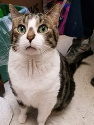 Joey is an 11-year-old front declawed boy who has a