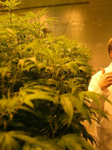 Trulieve COO Jason Pernell stands inside one of the grow rooms at the company's medical marijuana facility in Quincy on Wednesday, Feb. 1, 2017.