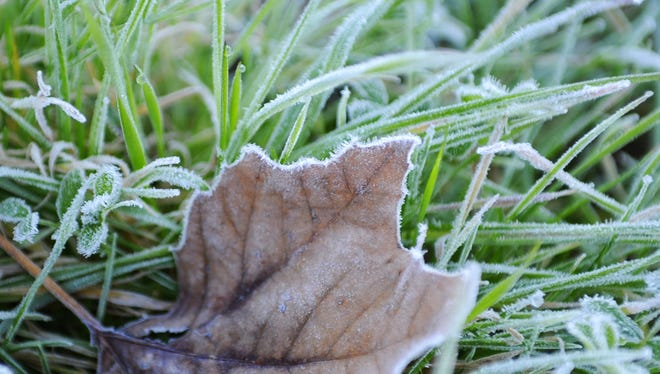 FILE: Overnight temperatures dipped just below freezing in the Salinas area, leaving frost on many surfaces, including these leaves slowly warming up.