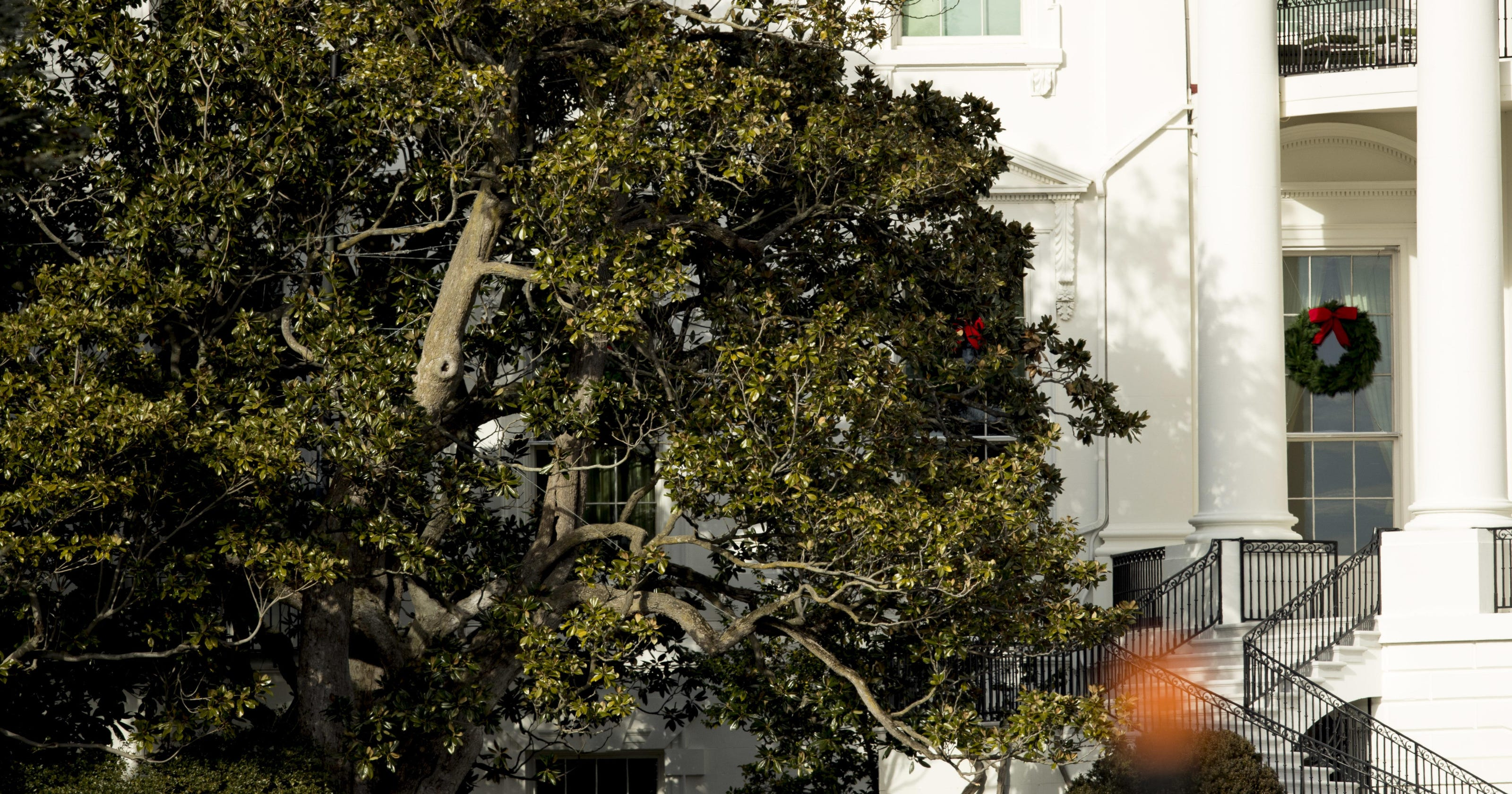 White House Historic Magnolia Tree Has Been Cut Back