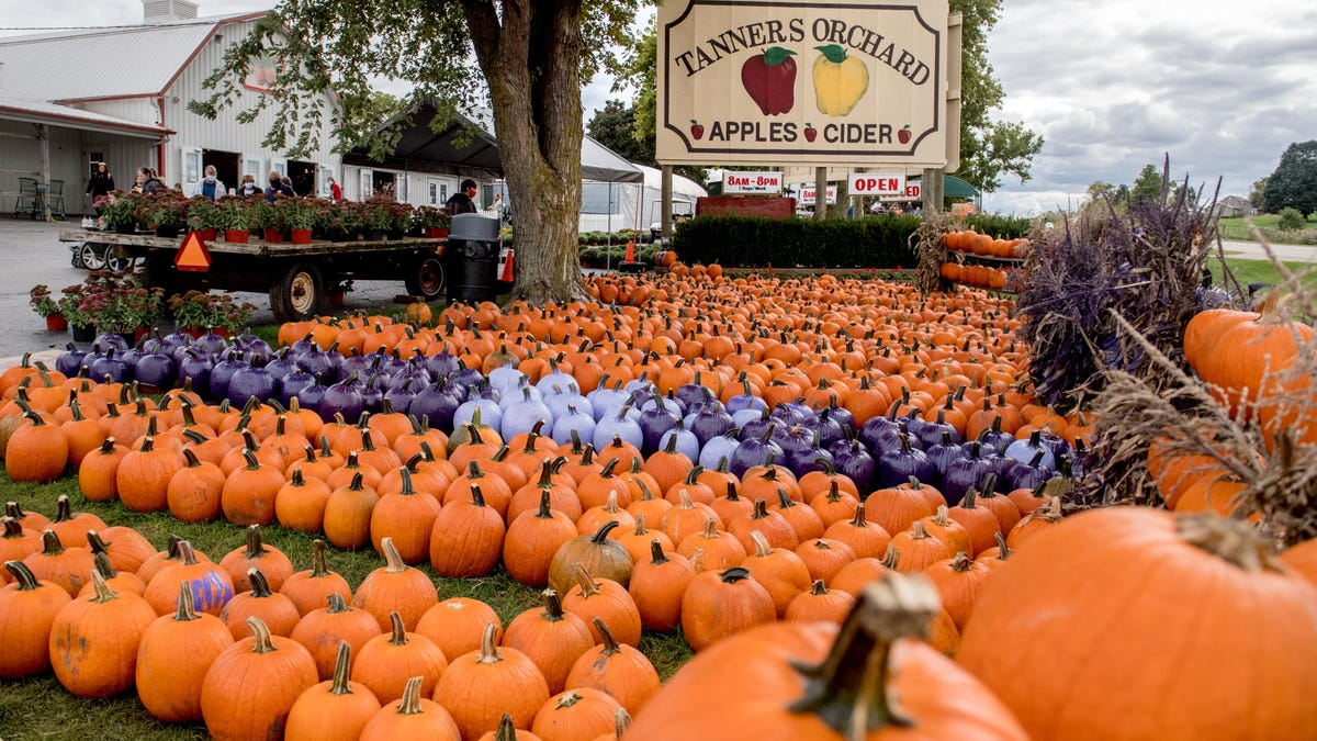 Looking for Illinois' best pumpkin patches? 15 top-ranked spots for gourd lovers