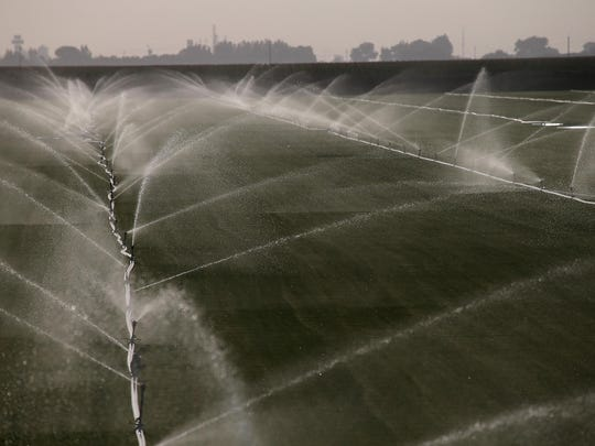 Sprinklers water a field of grass at a sod farm on August 8, 2014 in Lodi, California.