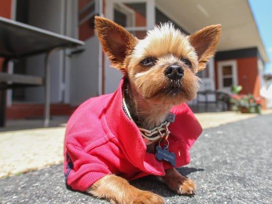 Tobi Petrocelli's dog Tigra keeps watch at her Point Pleasant Beach hotel, Casa Del Mar.