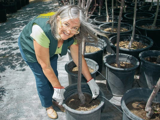 Las Cruces Tree Stewards