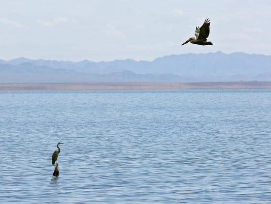 635876934478646957-salton-sea-birds.jpg