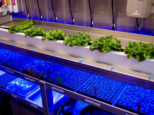 Exchange Shipping Container Farm (3)