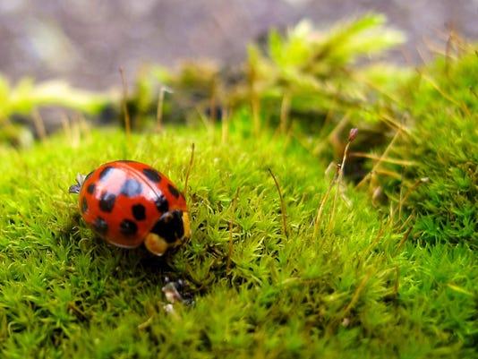 Gardening-Organic Pes_Atzl-1.jpg
