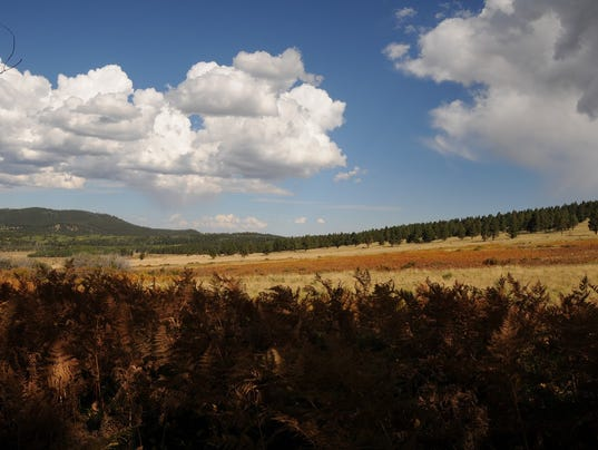 Wilson Meadow, Flagstaff