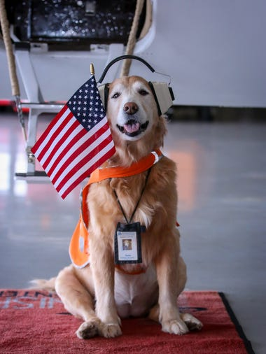 Sadie, Innisfree Jet Center's aviation canine and mascot,