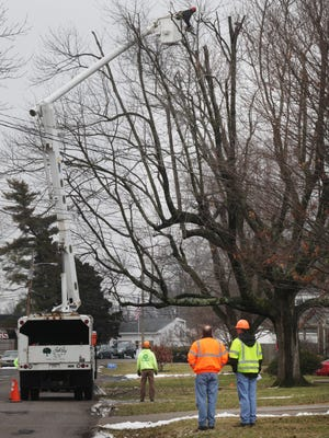 Tree topping near Bowman Field on Tuesday.