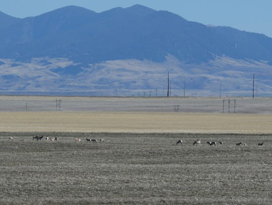 A herd of antelope feed against the backdrop of the