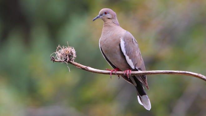 Dove season begins Sept. 1.