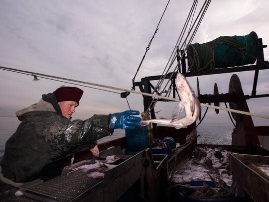 Roy Deal Jr. throws a spiny dogfish into a bucket.