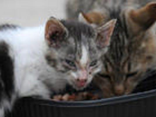 Feral cat problem