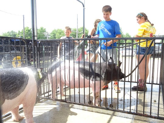 Zachary Harer, 13, of Bucyrus, washes his two hogs Tuesday at the Crawford County Fair. Harer is excited about the swine show, which start at 5 p.m. Thursday.