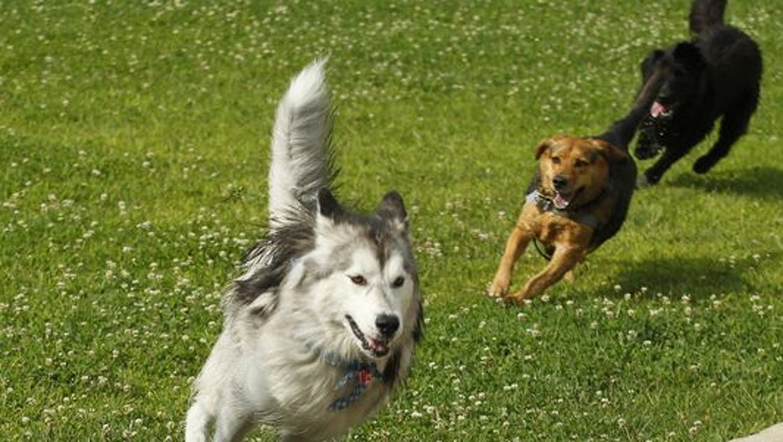 Dog Flu Confirmed In Lafayette What Indiana Dog Owners
