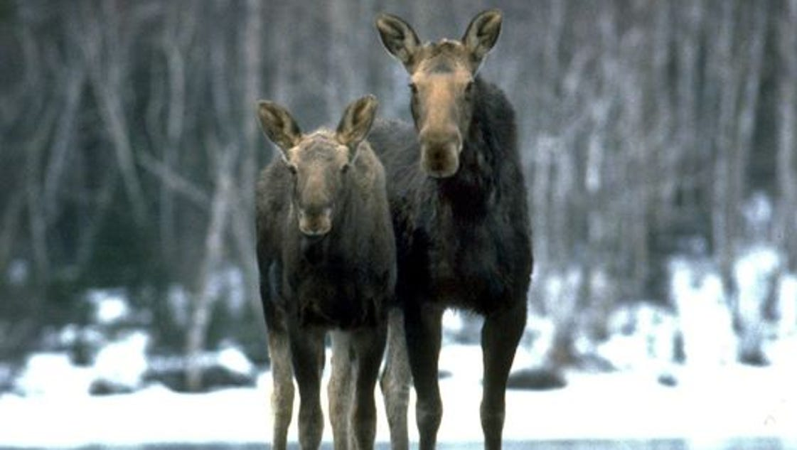 U.p. Moose Groups petition for pr...