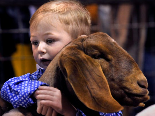 Taytam Wilke, 2, holds onto the lamb he was showing