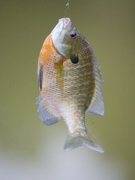 636619817878605878-061009-bluegill-fishing-96.jpg