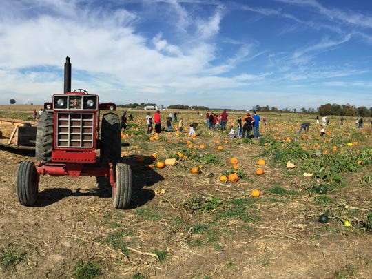 Goebel Farms is open this weekend for its annual corn maze and farm activities.