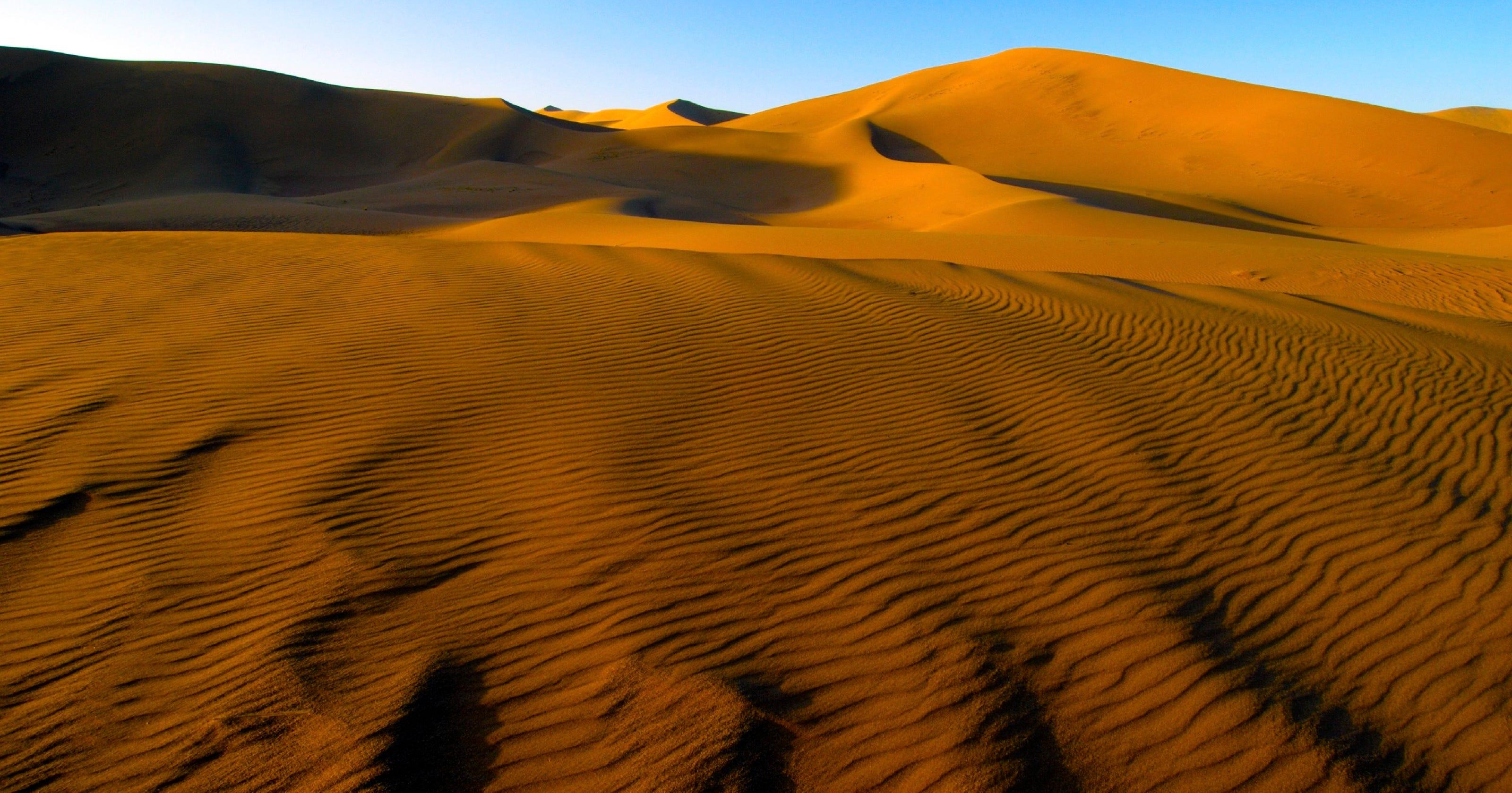 an ecological consultant treks through the gobi desert