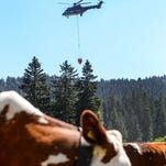 A Super Puma helicopter of the Swiss army is filling a water tank above a lake to refill the parched cattle watering tanks in Switzerland on July 24, 2015.