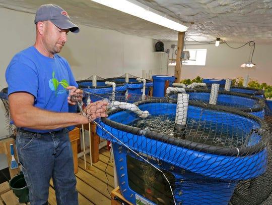 Nate Calkins prepares to feed a tilapia fish tank at