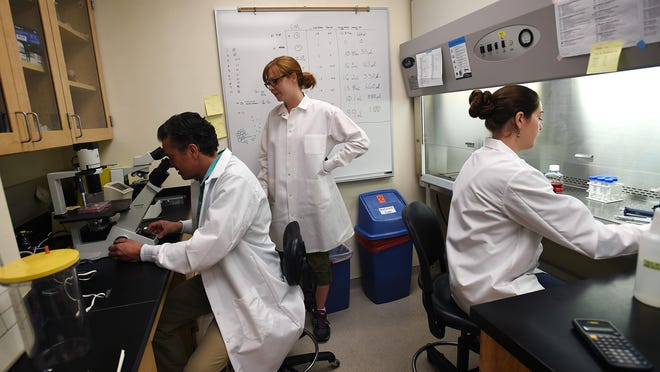 Dr. David AuCoin, left, works with staff research associates Dana Reed, middle, and Laura Meadows in the cell culture lab at the Center for Molecular Medicine building on Thursday.