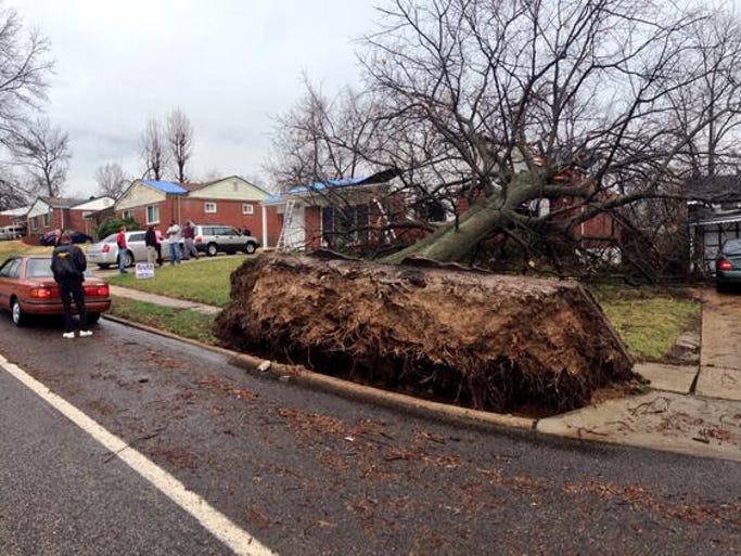 This giant tree was ripped out of the ground and fell onto a home.