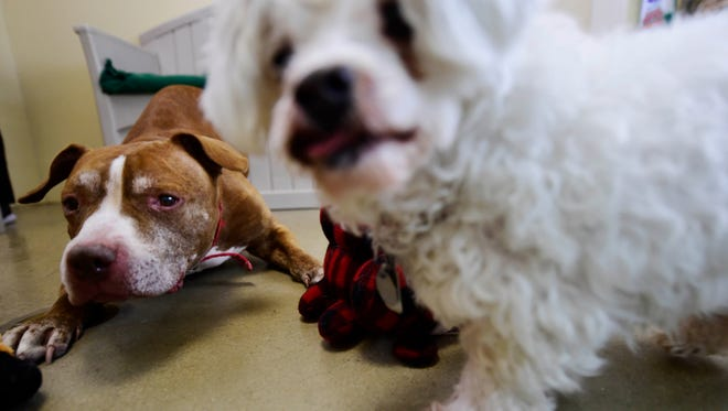 Hazel and Koda, the York Daily Record's Pets of the Week, are up for adoption at the York County SPCA. Photo taken Thursday, December 8, 2016.